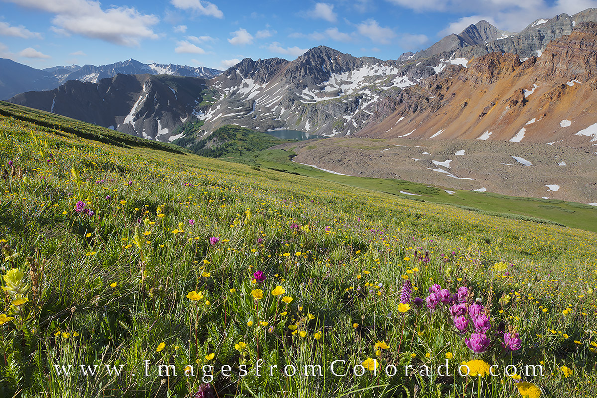 electric pass, colorado wildflowers, colorado wildflower images, cathedral lake, cathedral peak, cathedral lake hike, electric pass hike, maroon bells wilderness, elk mountains, elk range, photo