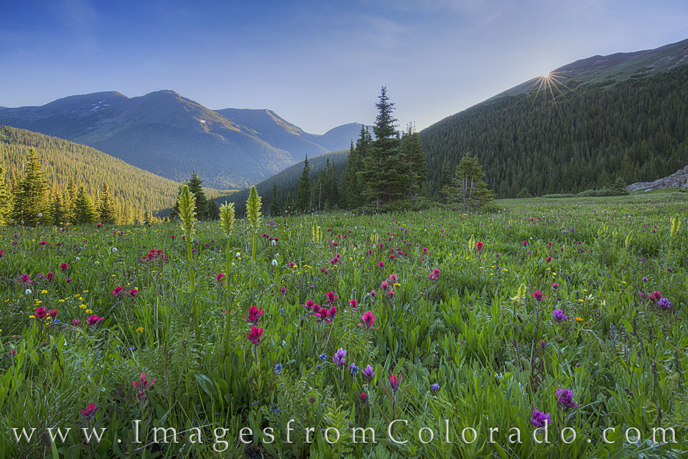 On a cold July morning, wildflowers fill Butler Gulch near Berthoud Pass as the sun peeks over the distant mountain. The hike...