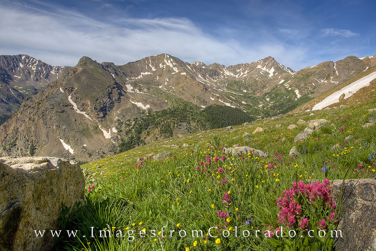 14ers, mount massive, mount oklahoma, wildflowers, colorado, summer, colorado wildflowers prints, hiking, colorado hikes, photo