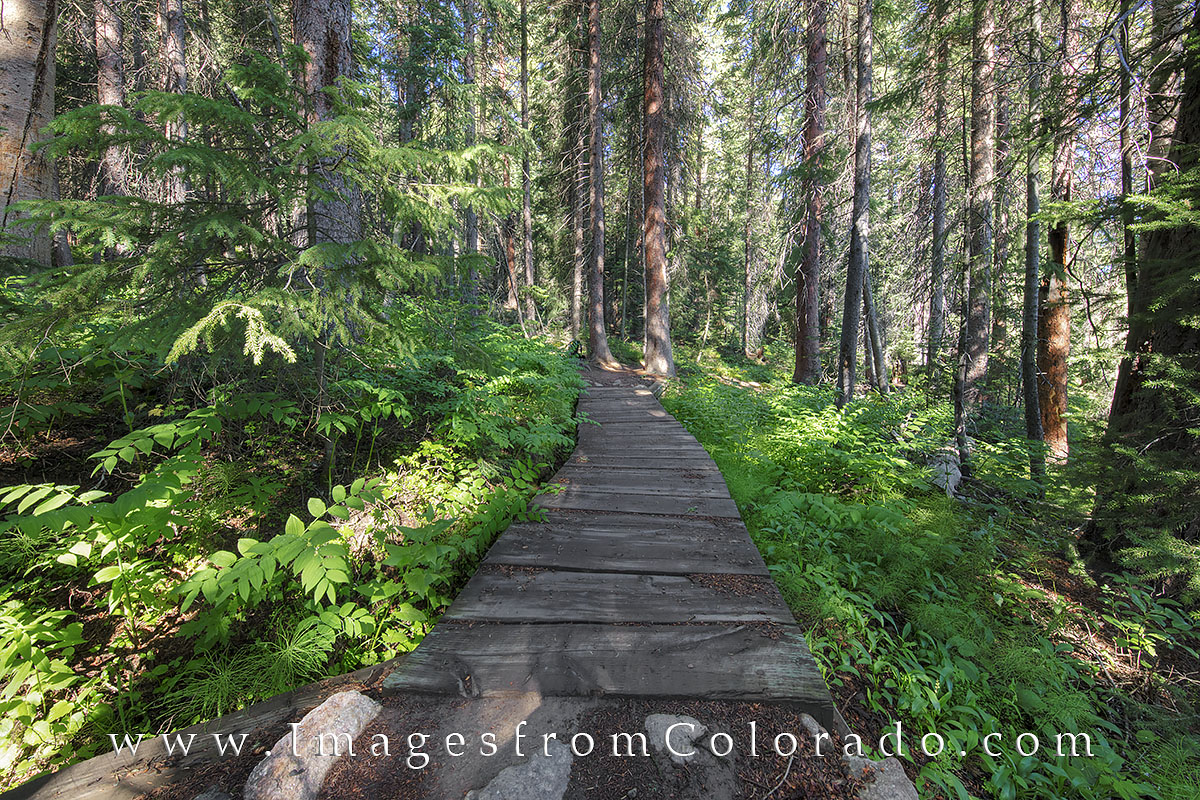 One of my favorite paths in Winter Park has several bridges to take you across small streams caused by snow-melt in the late...
