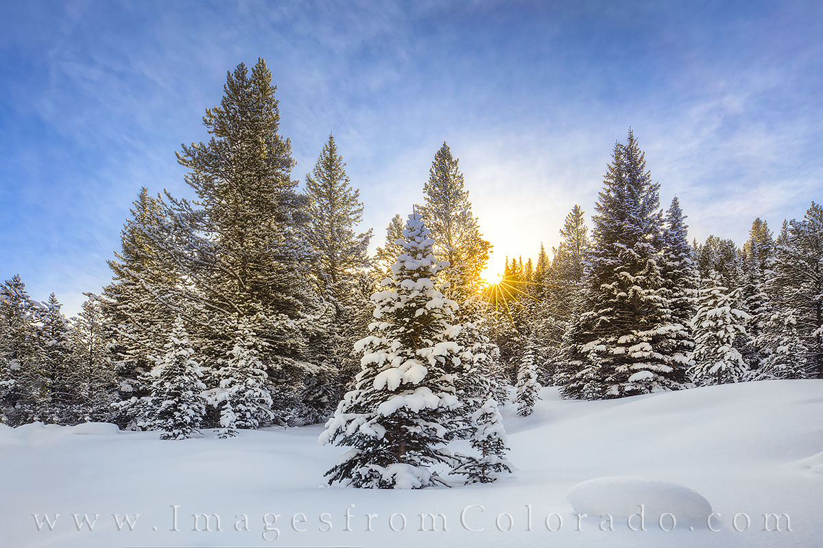 Winter Sunburst 1228-2