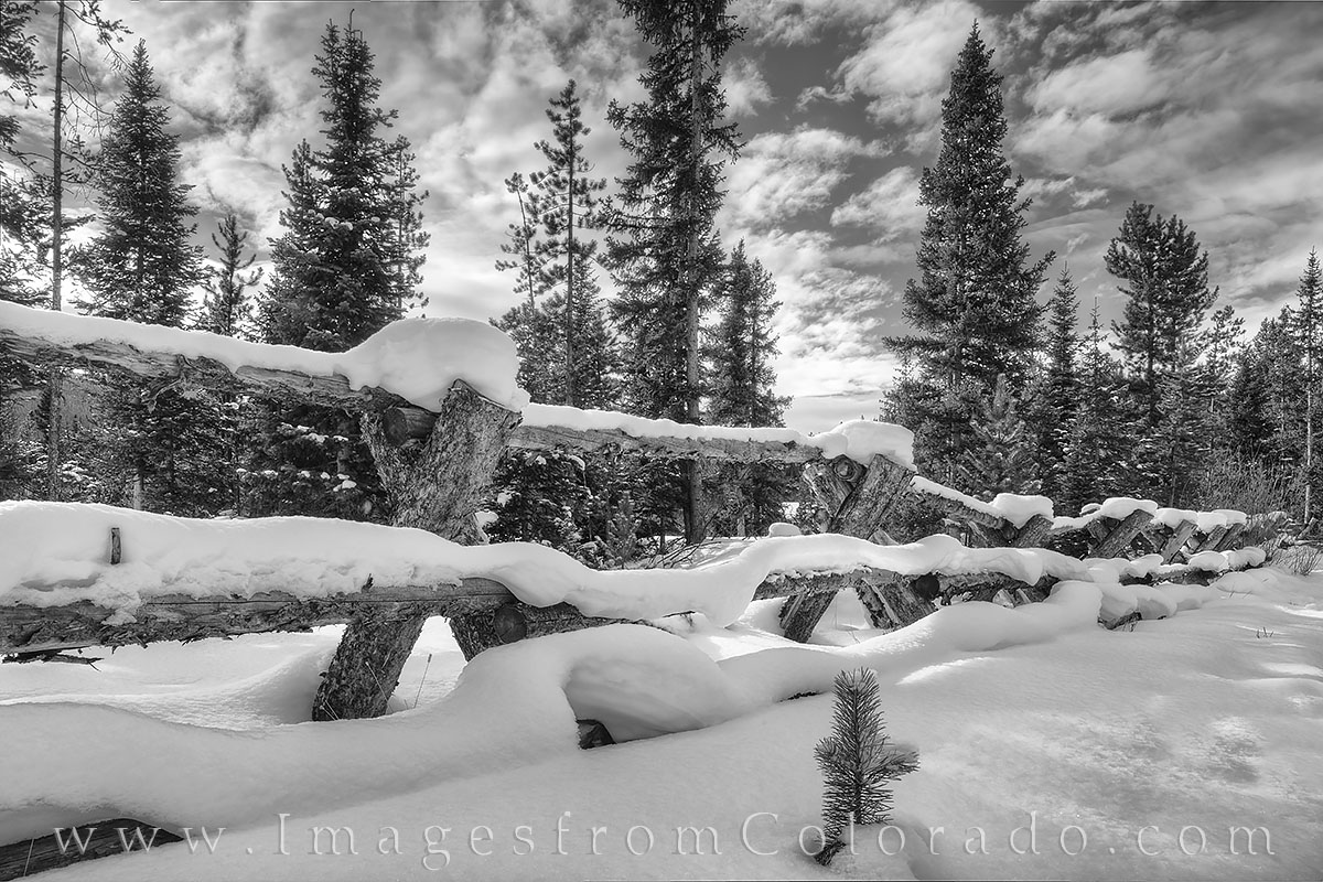 fraser, snow, fence, wooden fence, winter park, grand county, st. louis creek, trail, hiking, exploring, morning, black and white, photo
